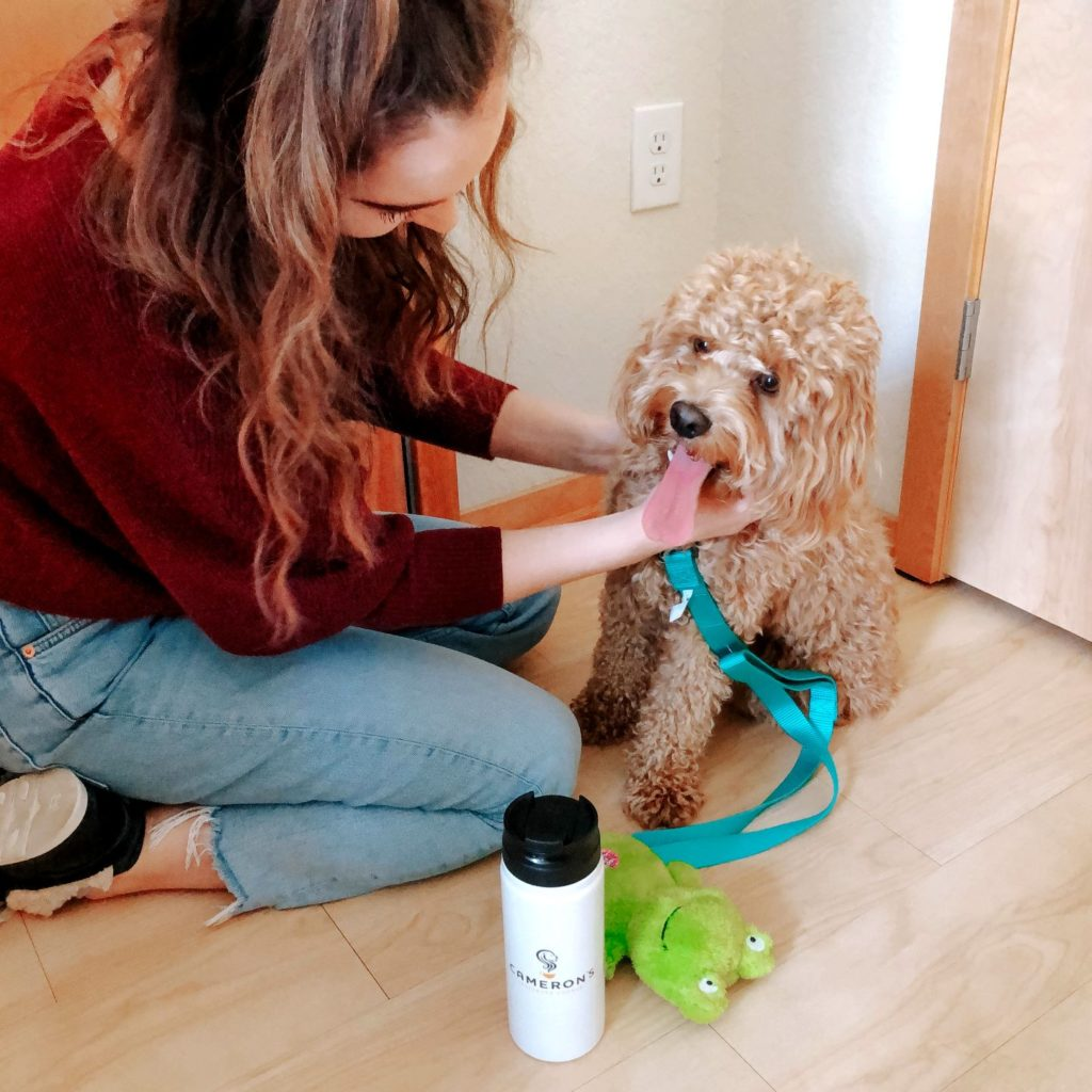 Woman putting leash on dog while drinking tumbler of Cameron's Coffee